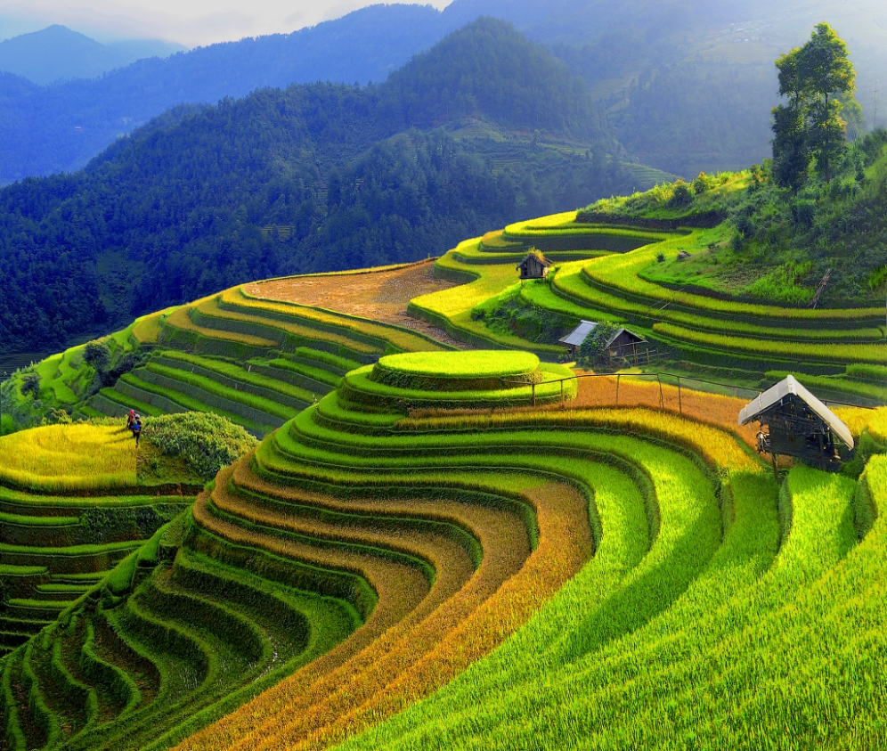 Rice Fields - SAPA